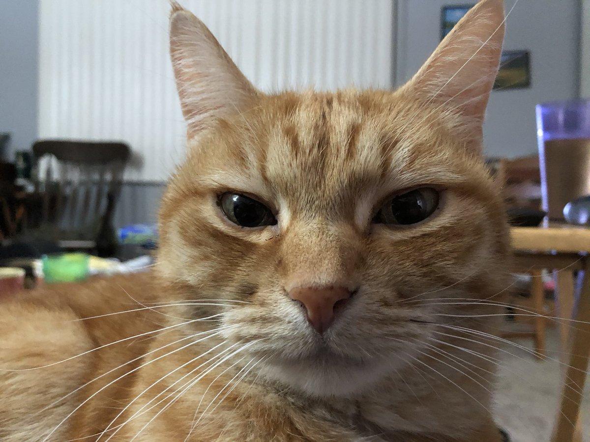 @BitchestheCat Kyprium is intensely displeased. #Catsjudgingkellyanne