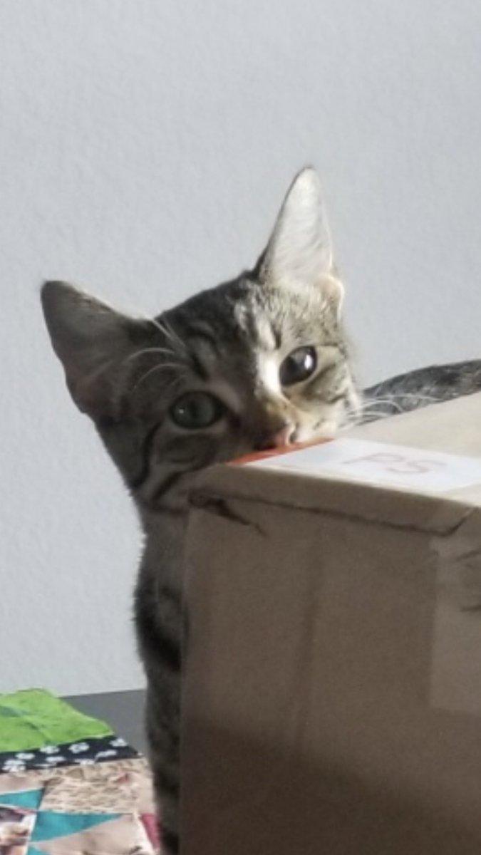 #Catsjudgingkellyanne FurBall sees what you did.