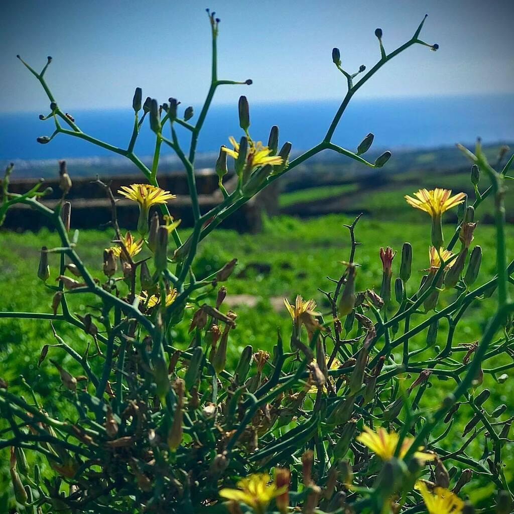 #256 Aulaga • • • #pic #photo #instapic #instaphoto #photooftheday #picoftheday #photography  #photograph #like #likeforlikes #lovethis #life  #pic #photo #instagram #photogram #lifestyle #aulaga #planta #naturaleza #vegetacion #invierno #enero #hoy …