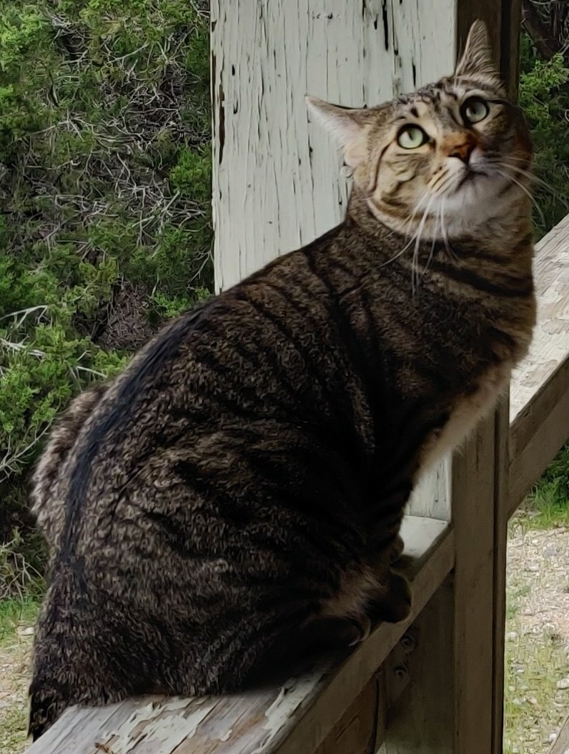 #Catsjudgingkellyanne outdoors.