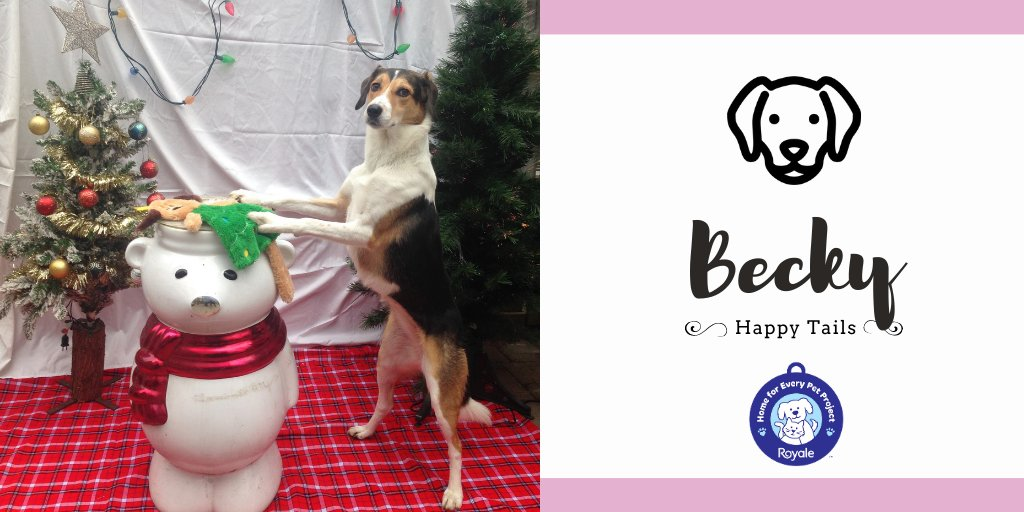 #HappyTails Presented by ROYALE® Becky. We want her life to be filled with happiness and comfort. She deserves it. Becky is my best friend and has filled what could have been a very lonely year due to COVID-19 with love and companionship.""