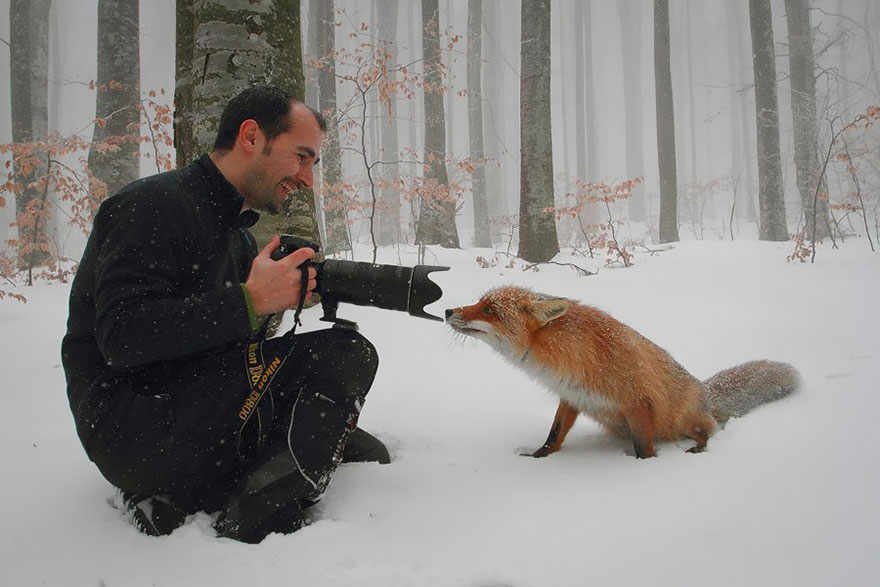 Animals interrupting wildlife photographers. A thread:  1. 📸 Dan Dinu