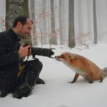 Image for the Tweet beginning: Animals interrupting wildlife photographers. A