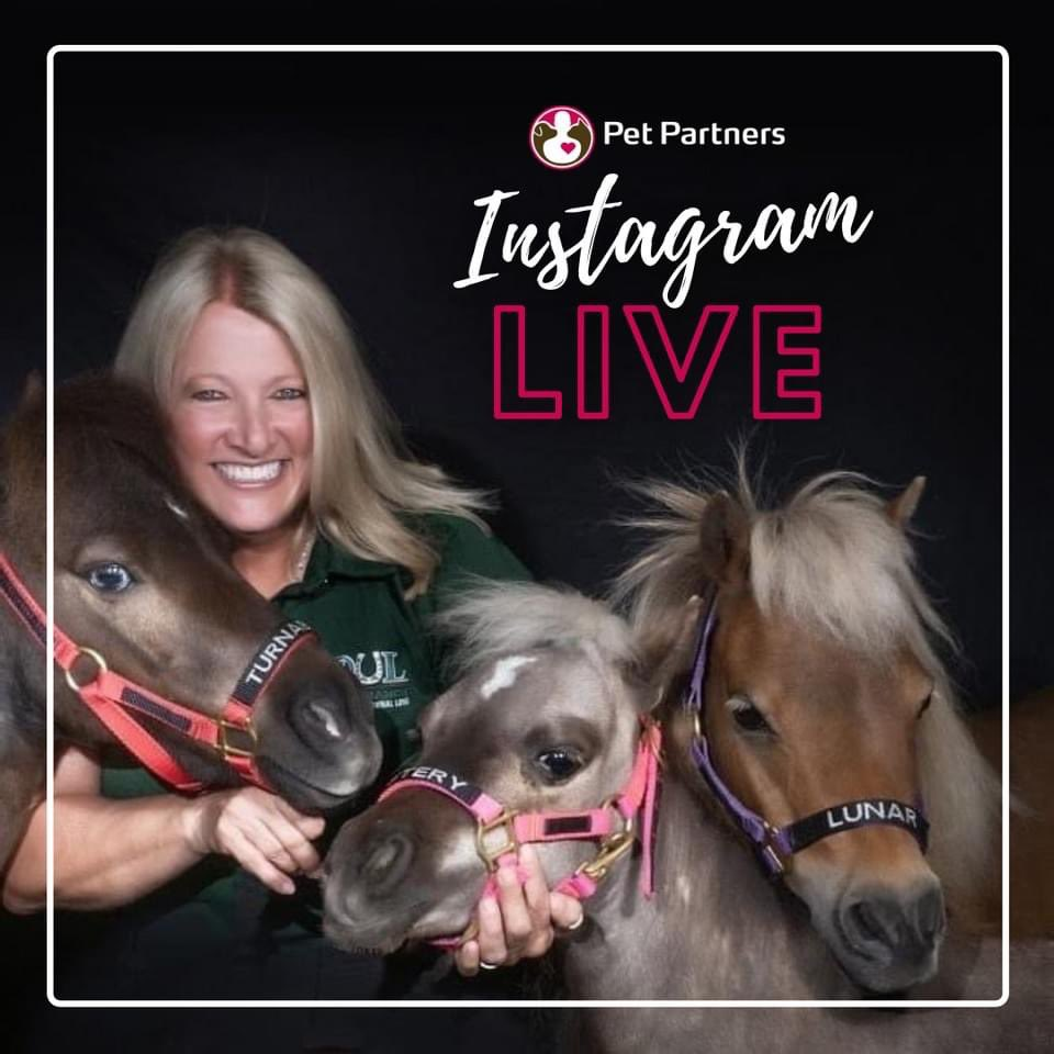 📹 #ICYMI TODAY!!! We will be joined by Founder/President of SOUL Harbour Ranch, Jodie Diegel, on Instagram Live with our host Lara Clear! . 🗓 January 17 at 1:00 PM ET / 10:00 AM PT. Follow us on Instagram at the Pet Partners page to tune in!