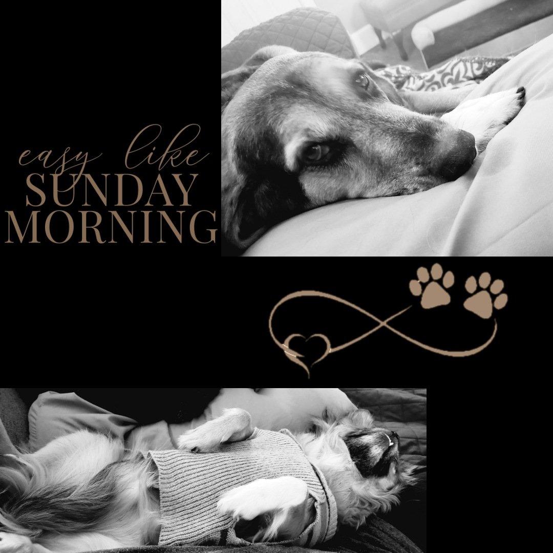 #RescueDogs #SundayMorning