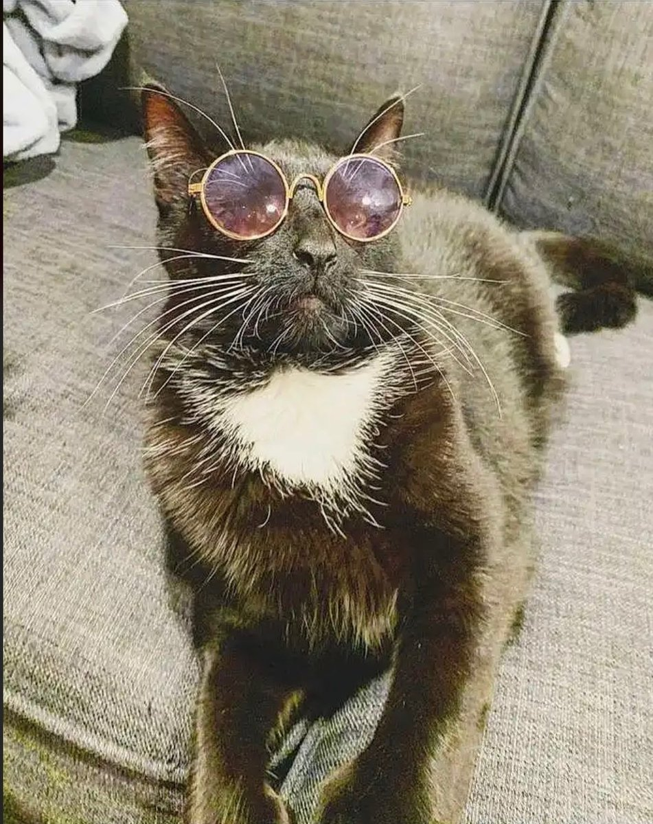 Simp - Hey guys, my cousin entered her cat into a photo competition. Would appreciate if you helped out and voted for Emmet! One of the coolest cats I know.
