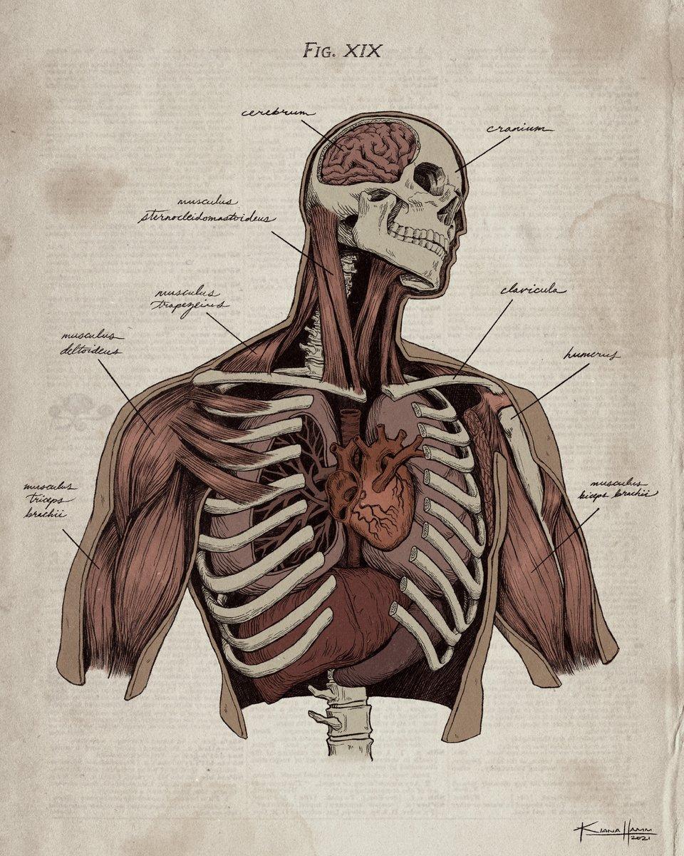 Replying to @kiana_hamm: autopsy