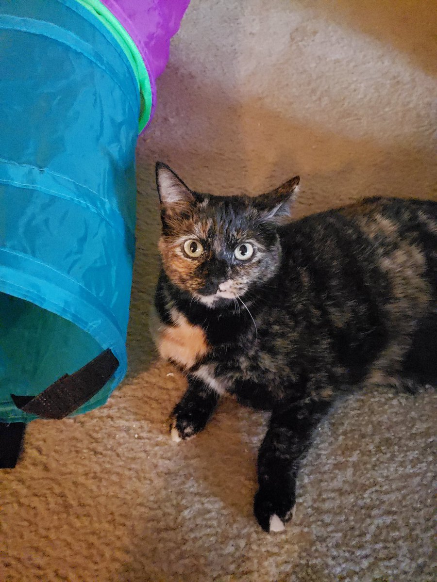 Happy #indoguration , Major from a former shelter dweller! Can't wait to hear about your cat friend! -shelby and jamie
