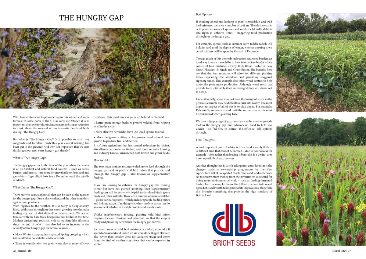 "Find out more about ""The Hungry Gap"" within the #Winter issue of Rural Life Magazine now by reading either Online for FREE  on Readly  or in Print:  #RuralLife @Bright_Seeds #conservation #shooting #countryside"