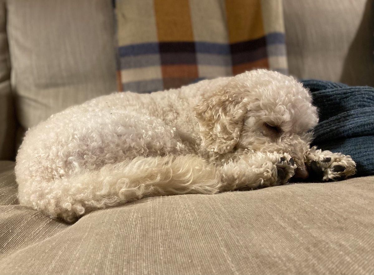 #sundayvibes #dogsoftwitter