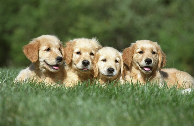 Puppies and puddles licks and hugs soft and lovable just look at their mugs. A smile on their face a twinkle in their eye they're just so sweet no need to ask why. - Patricia Walter