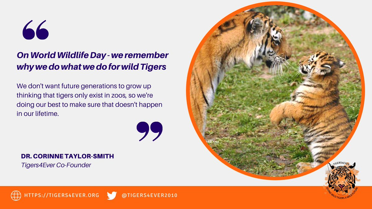 RT @Tigers4Ever2010: We think wild #Tigers are worth saving, do you? https://t.co/wxRxvSAqoC #WorldWildlifeDay https://t.co/Iovlp6Tlbo