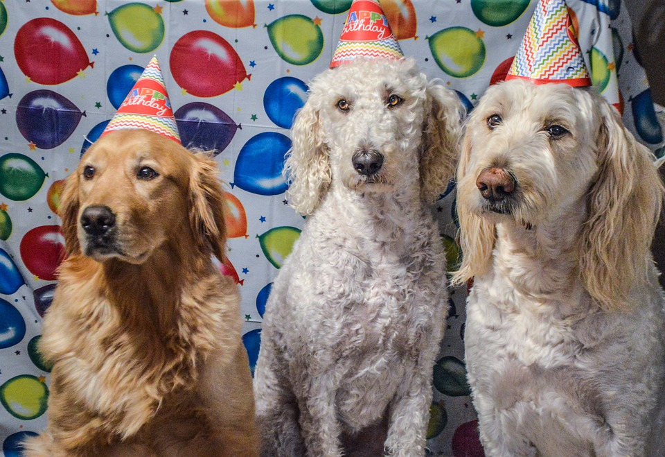 Looking for new ideas to celebrate birthdays at home? 🎈   ECHOage PET PARTY may be the answer! Children or adults meet each other's pets virtually and support Toronto Humane Society 🙂 🎈 Visit  and find the most creative ways to keep a virtual party going