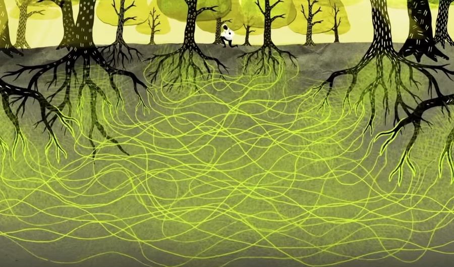 Are trees living a secret life underground? This fascinating video sheds light on the intricate network trees use to communicate.   Have you ever noticed a curious energy while among trees? Share your experience.     #trees #magic #WritingCommunity