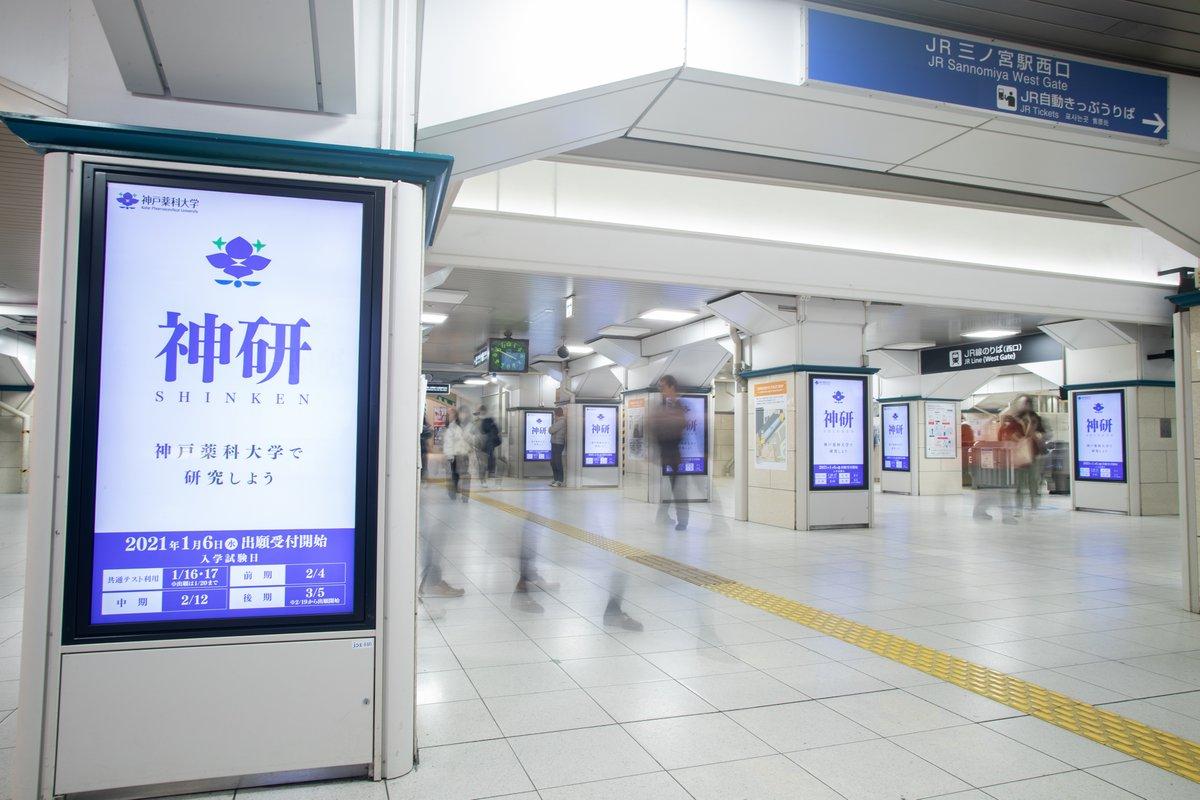 薬科 大学 神戸