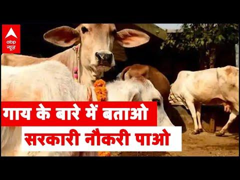 सरकार गायों को लेकर इस तारीख को लेगी परीक्षा, टॉप करने पर मिलेगा अवॉर्ड...  @prashantjourno   यहां पढ़ें पूरी जानकारी