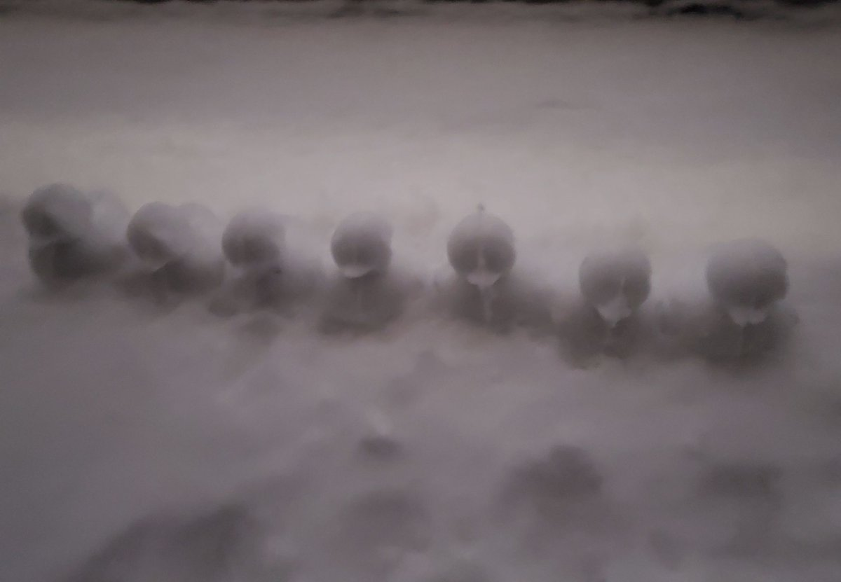 나는 8년 동안을 기다리고 있지만 이곳은 눈이 오지 않아... 참 슬프네... 나도 눈사람 만들고 싶은데... 언제 올까... 💜🐨🥺 #쭌 #남주니 #남준 #RM @BTS_twt