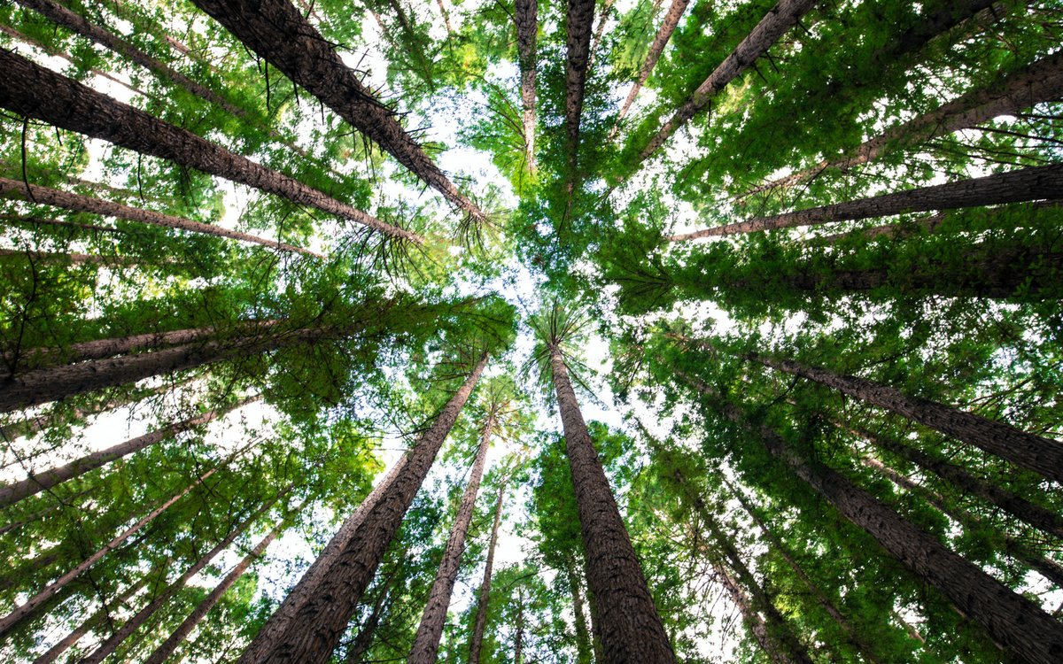 """""""I took a walk in the woods and came out taller than the trees""""  ― Henry David Thoreau  What does this quote mean to you?  #QOTD #WritingCommunity #AuthorCommunity"""
