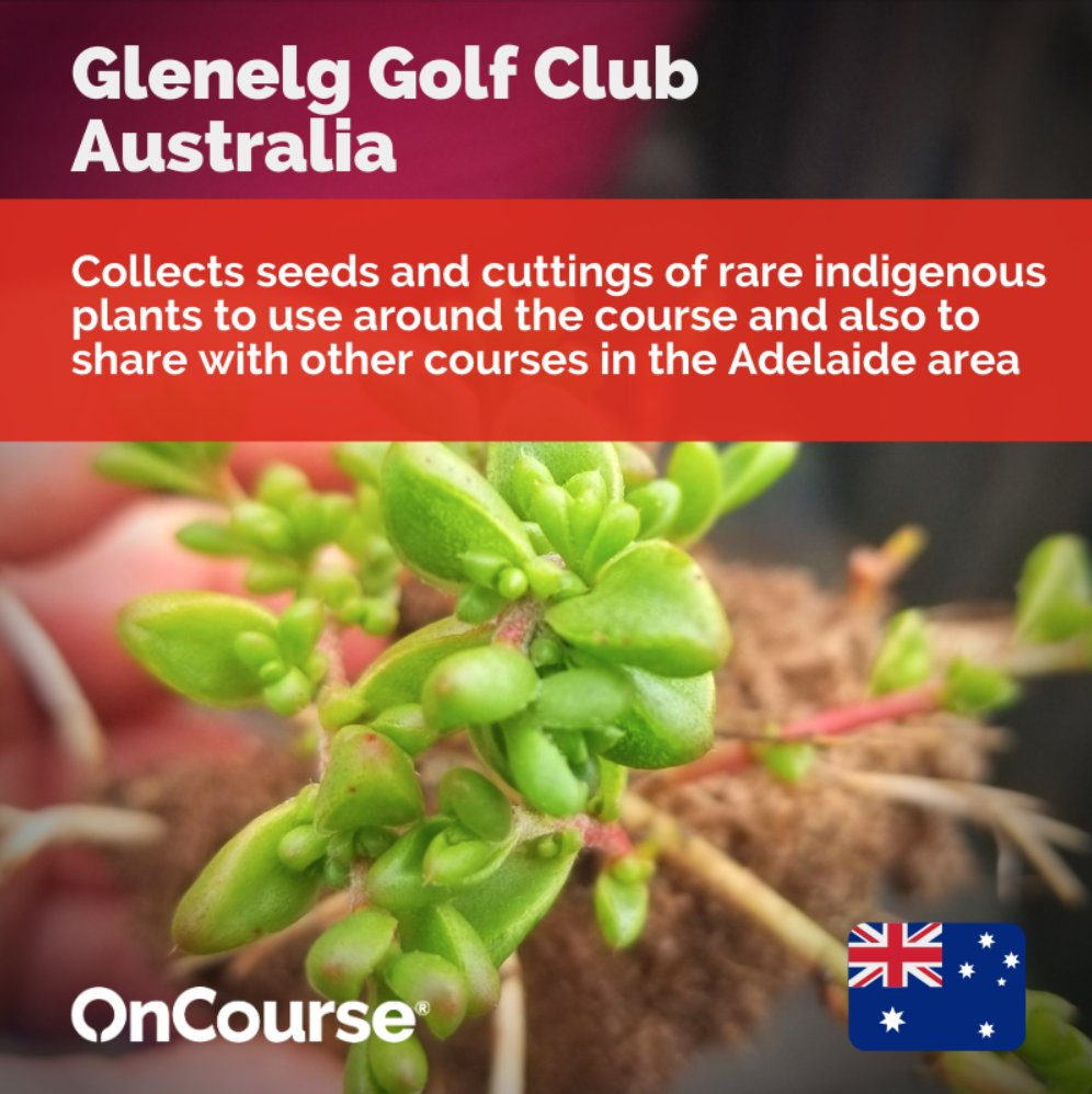 At Glenelg Golf Club, the team have not only been preserving some of Adelaide's indigenous plants on the course but have also shared seeds and cuttings with other local clubs. What could your club to do help nature flourish in 2021?  @sustainablegolf  #GolfAustraliaSA  #TheASTMA https://t.co/zdXjPNpvbC