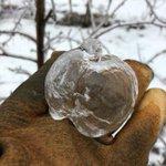 ゴーストアップル?!初めて聞く現象…リンゴの形をした美しい氷が自然に出来ている!