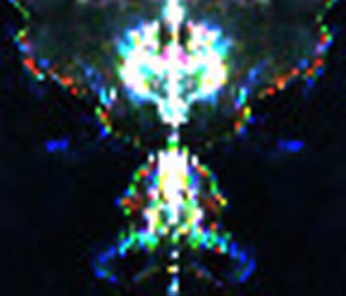 @elonmusk Interdimensional Beings found in Nature #Aliens