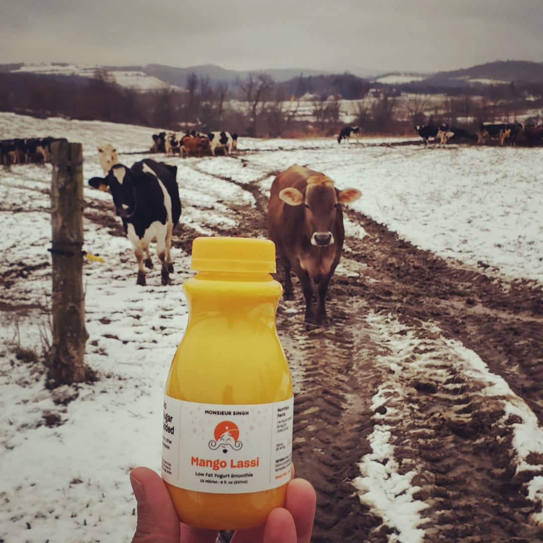 First Mango Lassi of #2021. Made at the beautiful #RonnybrookFarm. #HappyNewYear 🥳. These cows probably think I'm weird 🙄  #happy2021 #lassi #mangolassi #mangolassie #mango #singh #monsieursingh #monsieursinghlassi #tastyandhealthy #deliciousandnutritious #healthyandhappy