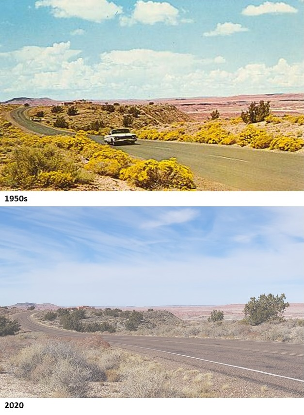 Compare a 1950s postcard with a photo of the same spot between Tawa and Kachina Points taken last week. I think the photographer was standing on a chair back in the day! (hl) #TBT #ThrowbackThursday #history #FindYourPark #EncuentraTuParque #PetrifiedForest #NPS #nationalpark
