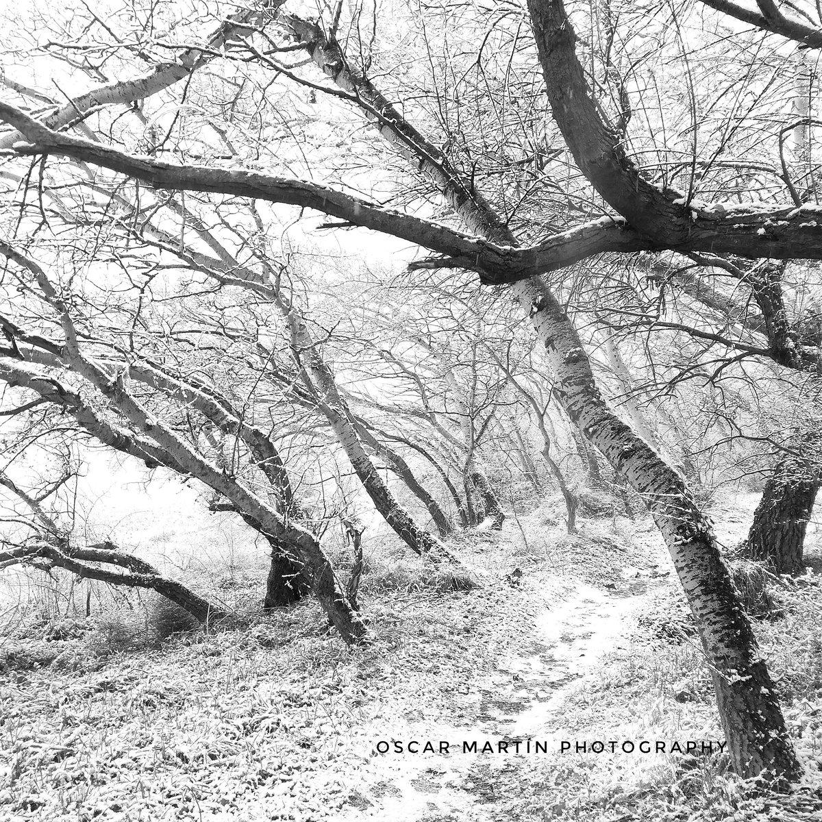 White Nature. Serie V   #NievaEnMadrid  #nievemadrid #Fotografía #Photography #blancoynegro #blackandwhite #bnw #bw #monochrome #HuaweiP20Lite #HuaweiP20 #BorrascaFilomena #alcaladehenares