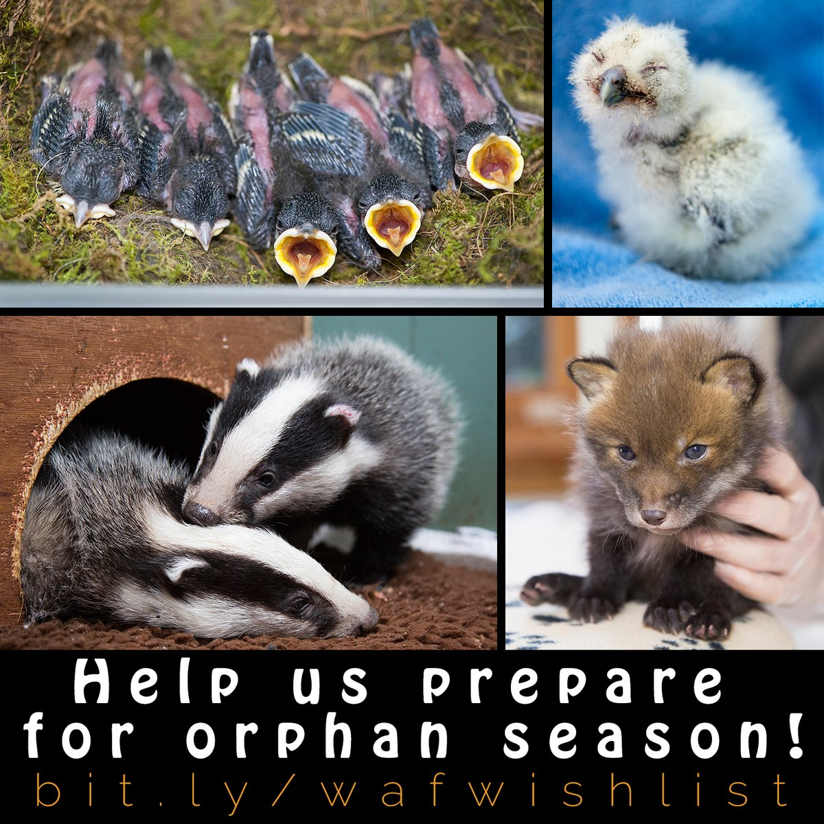 Now 2021 is here, it won't be too long before orphan season begins!  Preparations are well underway to ensure we can cope with 80+ new patients a day but, if you would like to help us prepare for the cutest part of our year, please visit   Thank you!