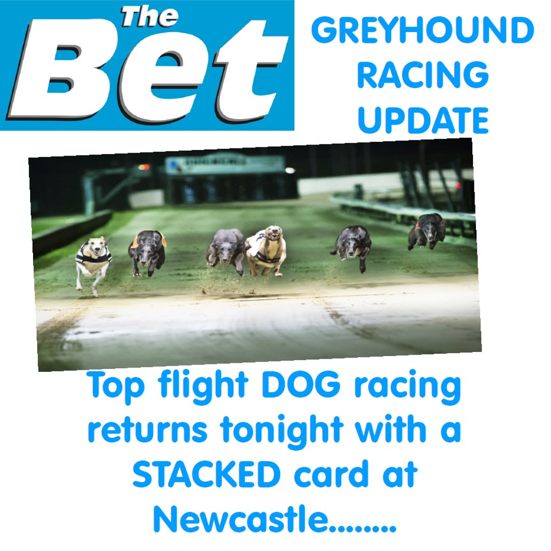 hove dogs betting trends