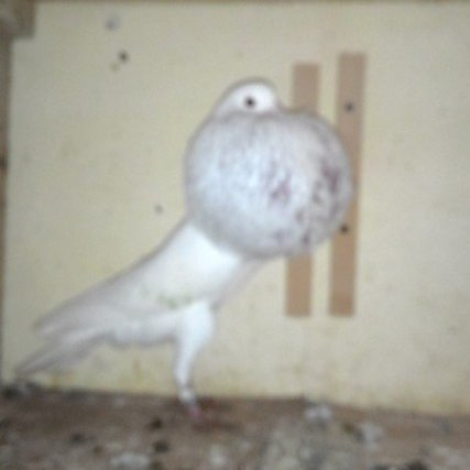 Replying to @sparkkiiro: So @spectraloats was showing me pictures of pigeons for adoption and this is all I could see