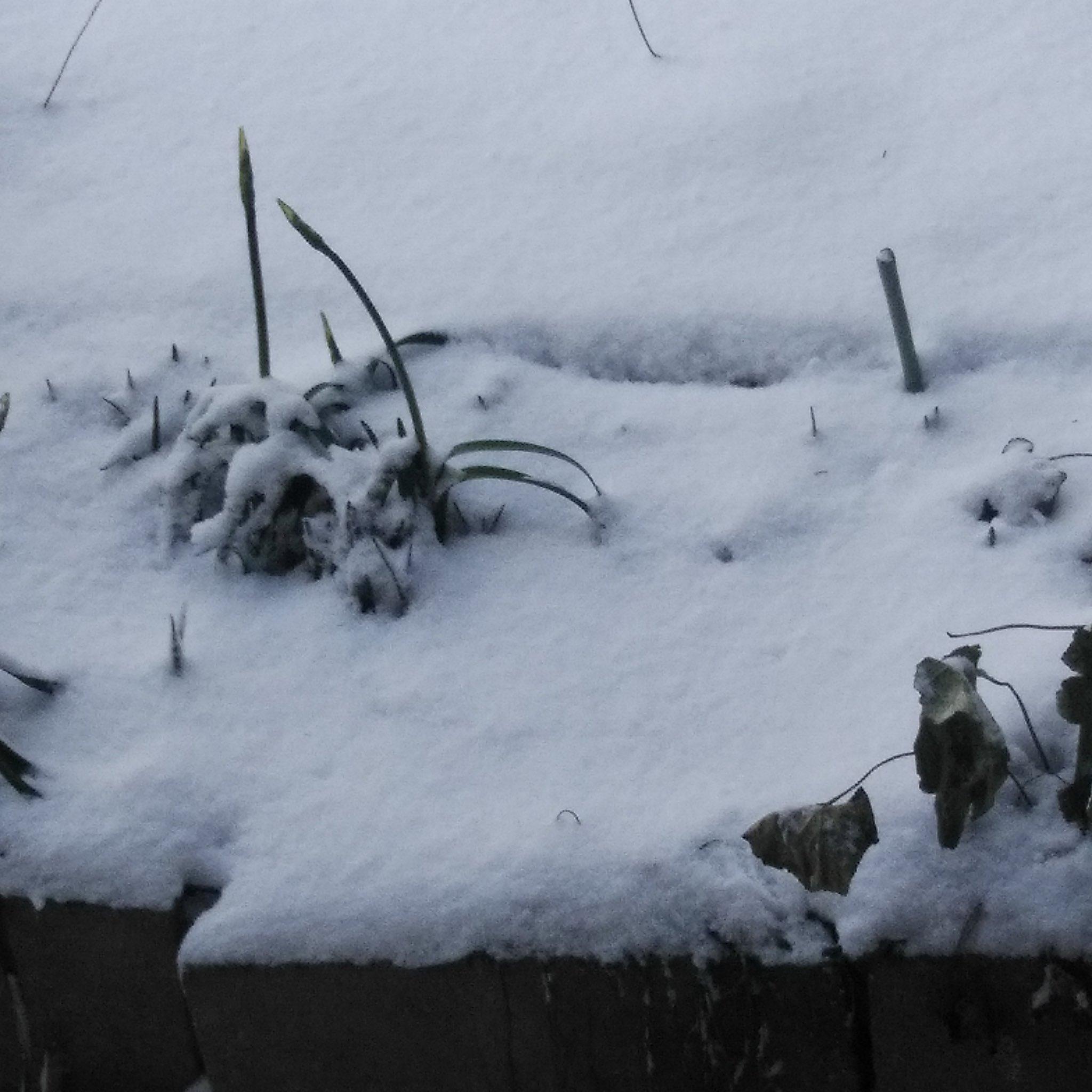 ない line 雪 降ら