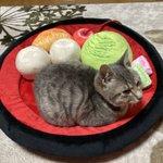 フェリシモのあんみつクッション・ベッドがリアル!くつろぐ猫が可愛すぎると話題に!