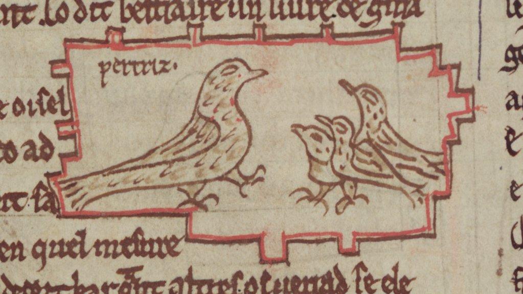 A manuscript illumination ofa partridge and its young