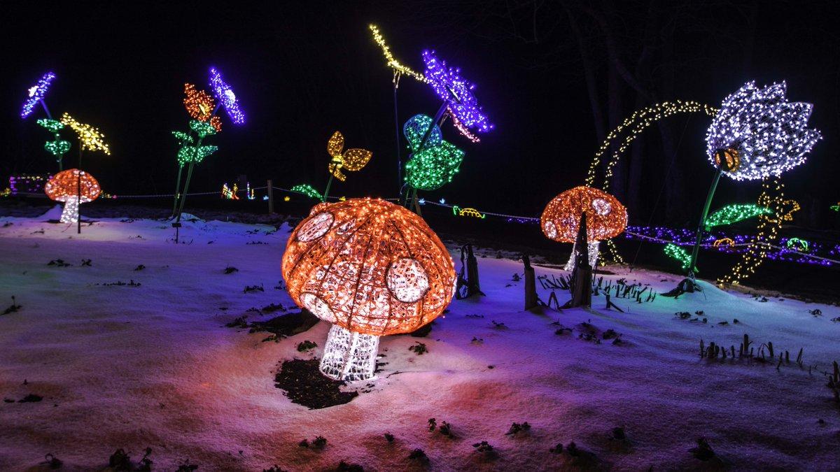 ErODssXXIAAyZQg - Meadowlark's Winter Walk Of Lights Meadowlark Botanical Gardens December 28