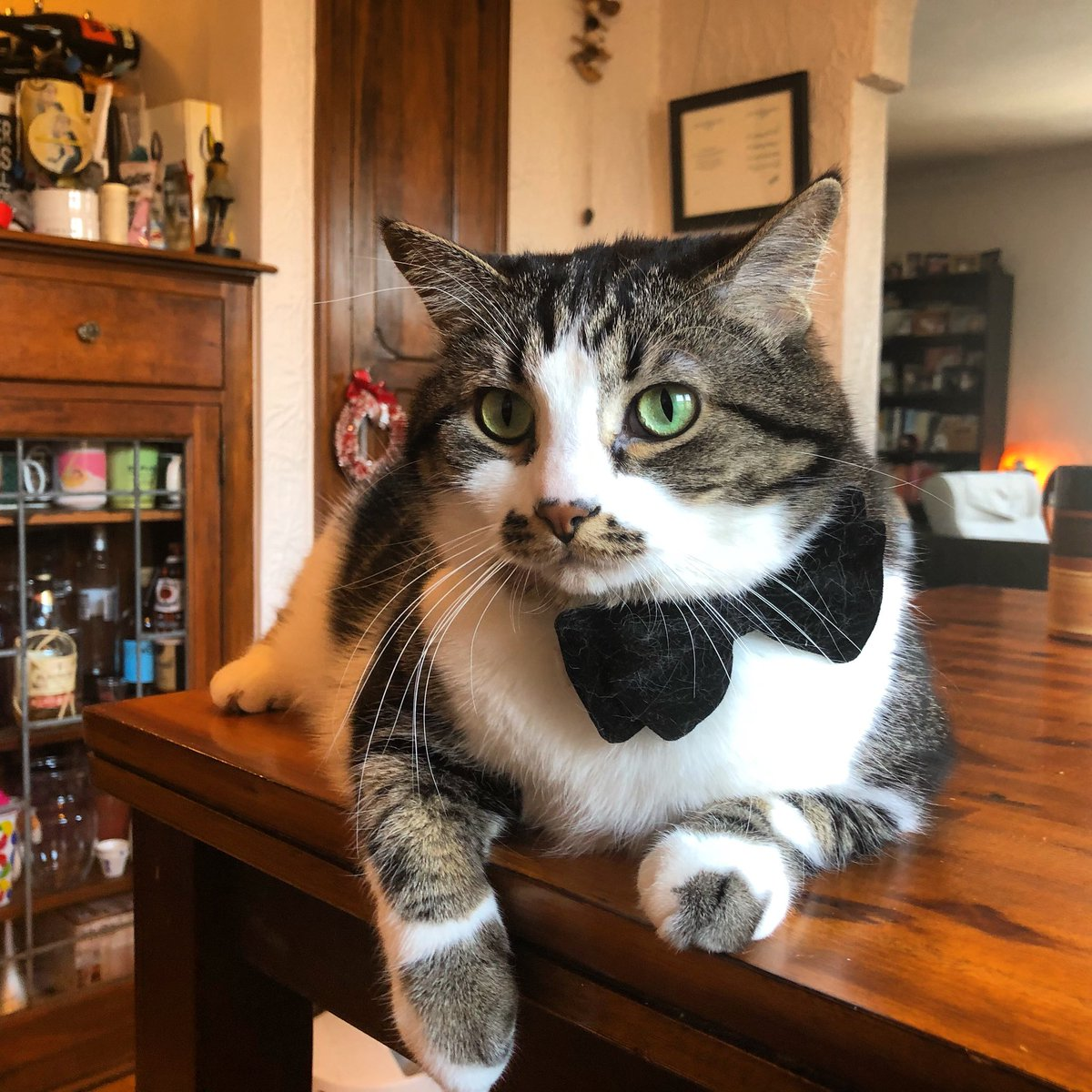 @dionnewarwick Meet George Muffins! He loves formal wear and raw chicken #peaceandpets