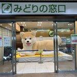 えっ?JR八王子駅のみどりの窓口に巨大な秋田犬が座っているw