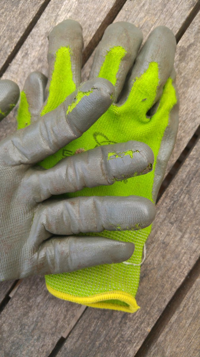 Today's #ecoact is to never again buy #garden #gloves coated with a #plastic like film....this material quickly breaks apart polluting the environment. #gardengloves #beatplasticpollution #beatpollution #4life1Earth