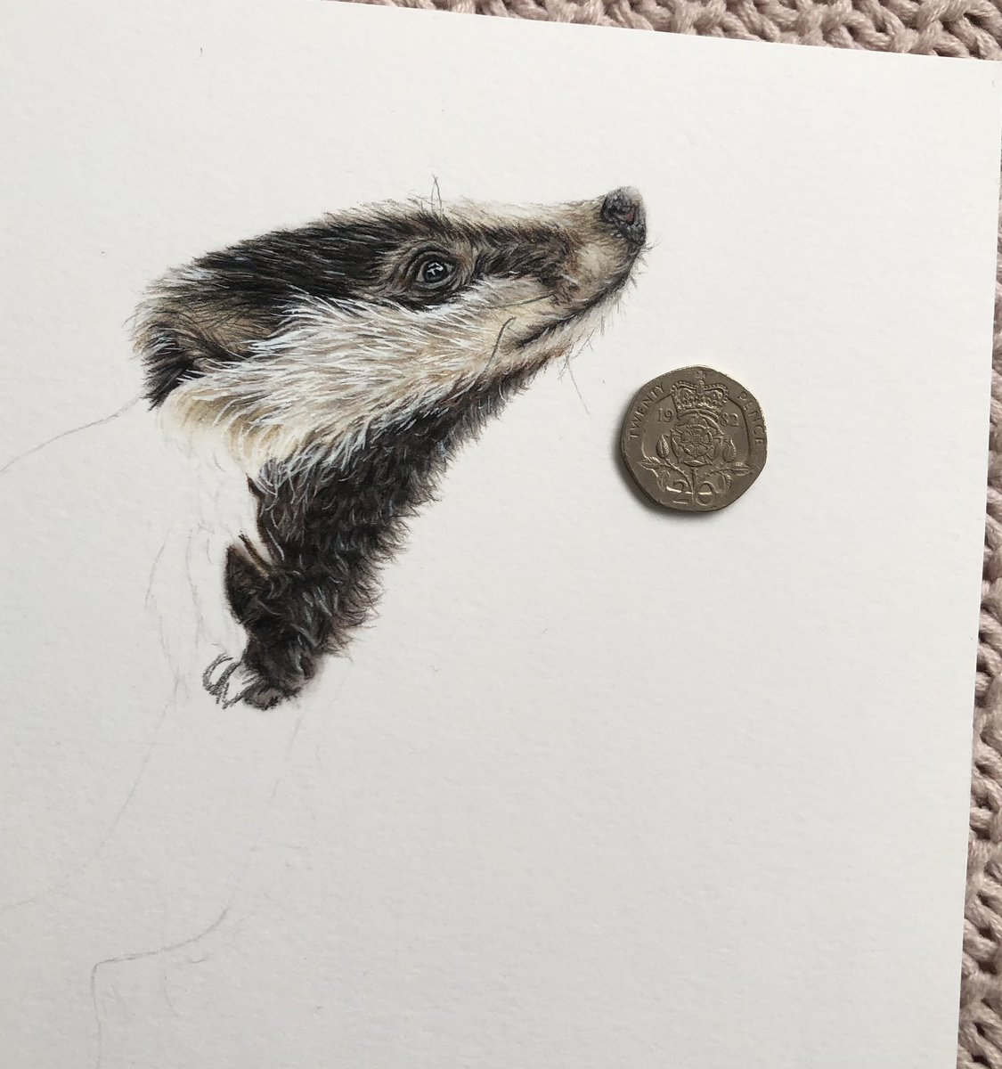 Aged 17, making some more progress on my badger drawing! here's a little size comparison next to a 20p coin 🥰 #wildlifedrawing #wildlifeart #animalart @BadgerTrust #badger @BBCSpringwatch @ChrisGPackham @swlanaturaleye