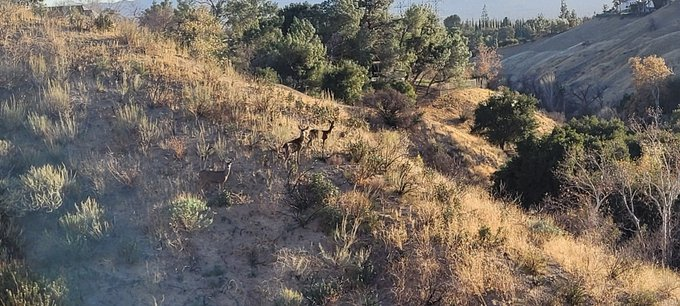 Saw a family of deer on the trails today 😍🥰 can you spot them? https://t.co/ASE8c26Y3d
