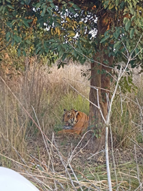 Happy to note that a Tiger from Corbett has been successfully released in Rajaji Tiger reserve. A good step towards long term augmentation of the Tiger population. @moefcc  @ntca_india