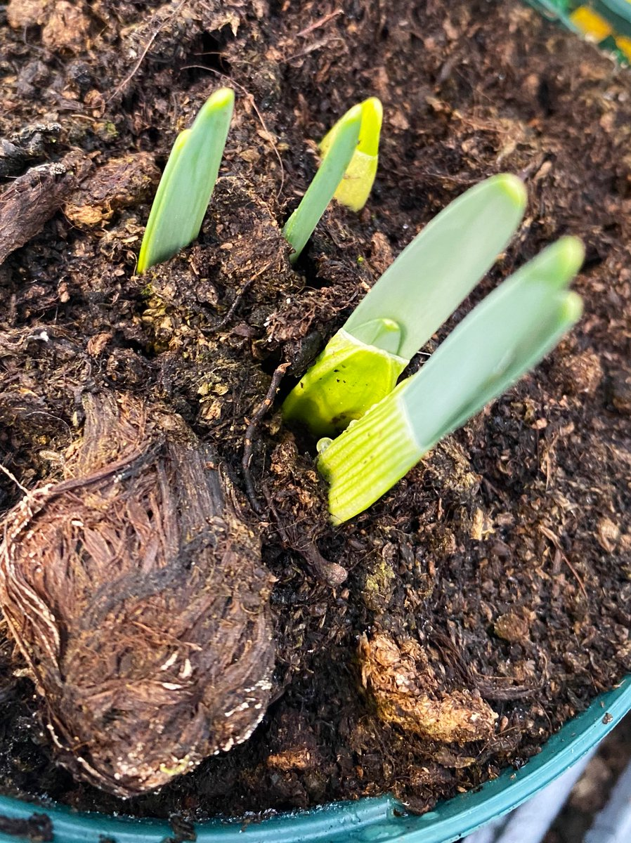 New day, new week new shoots. #nature #gardening #wellbeing