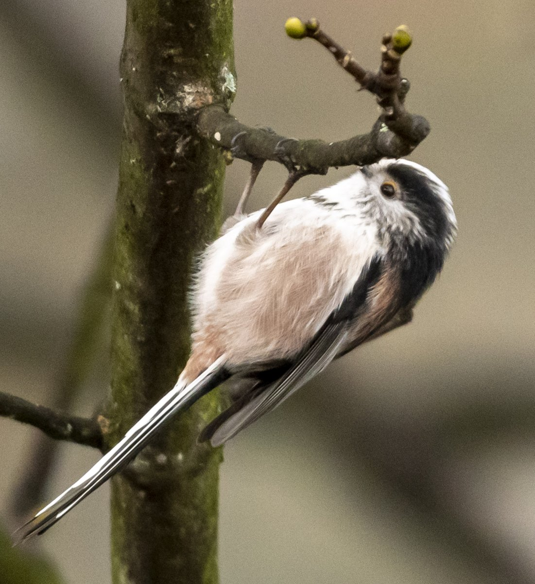 Now would be a good time to clean out any bird feeders and nest boxes. If you haven't got one and are thinking about getting one, the BTO have some great advice on nest boxes.  #wildlife  #nature #rspb #bto #birds #naturelovers #outdoors #nature #bootroutes