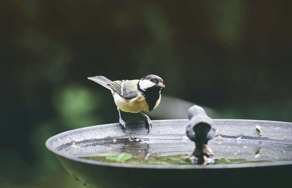 Give back to the ecosystem; help these delicate souls by placing a bowl of water or a handful of grains on your rooftop. Let our future generations enjoy the beauty of Mother Nature Peacefully. #MyDutyForNature #nature #birds #giveback