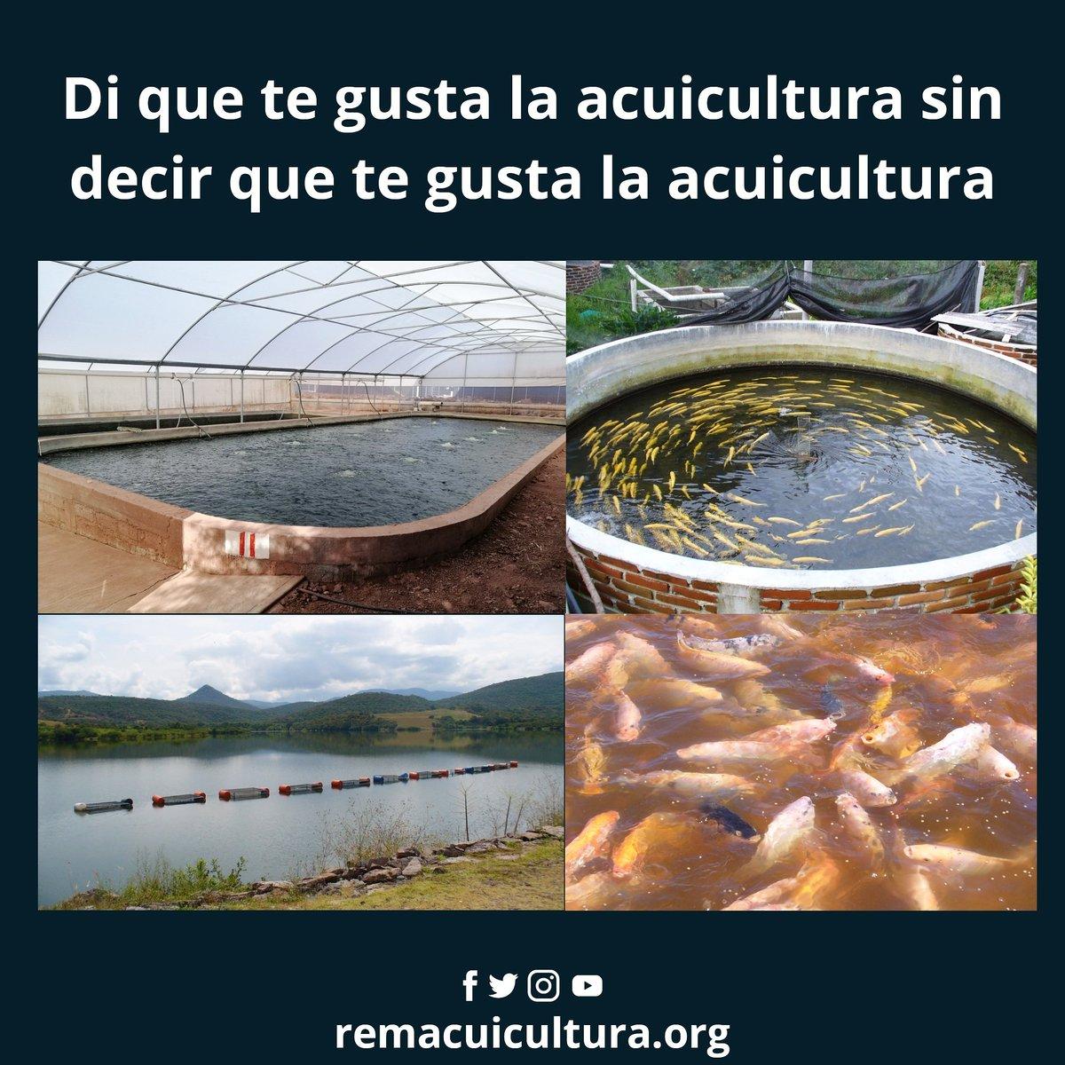 Empezamos: Me gusta el único sector agroalimentario que será capaz de satisfacer la demanda de alimentos en el futuro.  #aquaculture #aquicultura #acuicultura #acuacultura #instacuicultura #instagood #fishfarm #fishpond #granjasacuicolas #peces #cultivodepeces #amolaacuicultura