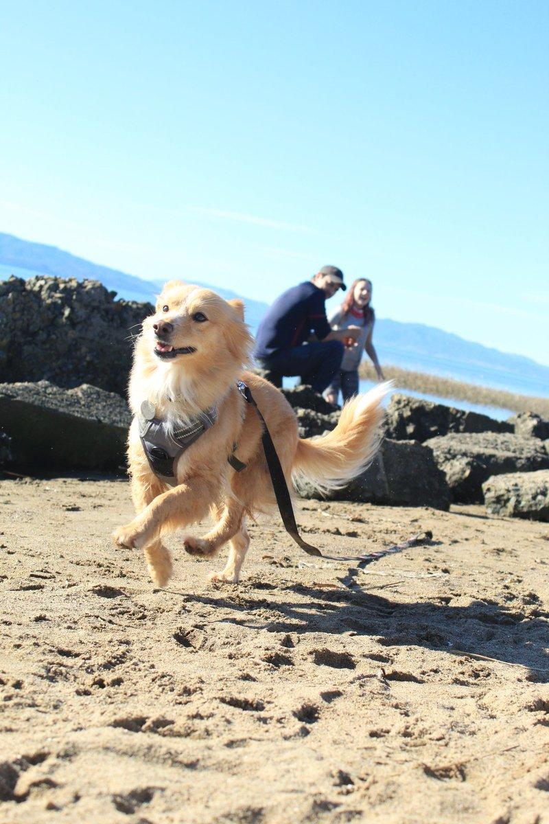 No looking back! #dogsoftwitter #doglovers #goodbye #sundayvibes #AdoptDontShop