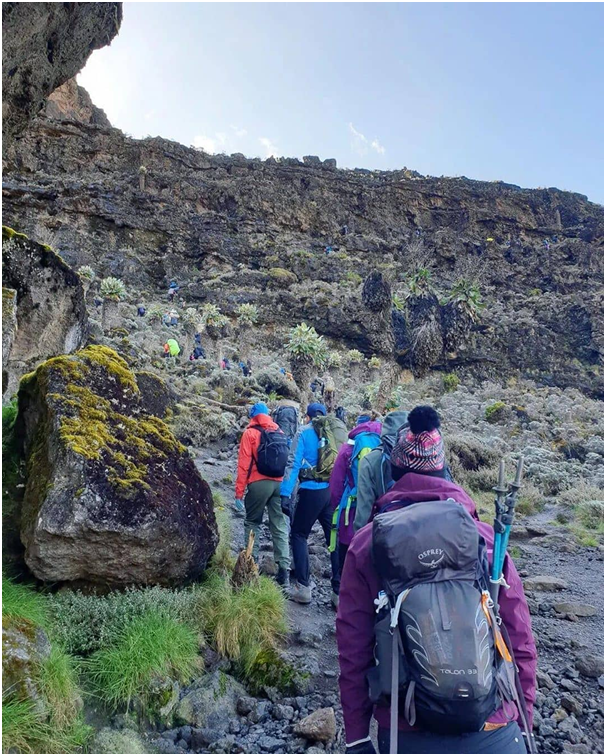 During your trek you will be tree-ted to the amazing nature that can only be seen on Kilimanjaro.  #kilimanjaroadventures #nature #photography #trekkingkilimanjaro #climbing #travelafrica #safari #climbinglovers #climbinglove #climbingtraining #mtkilimanjaro #kileleclimbtours