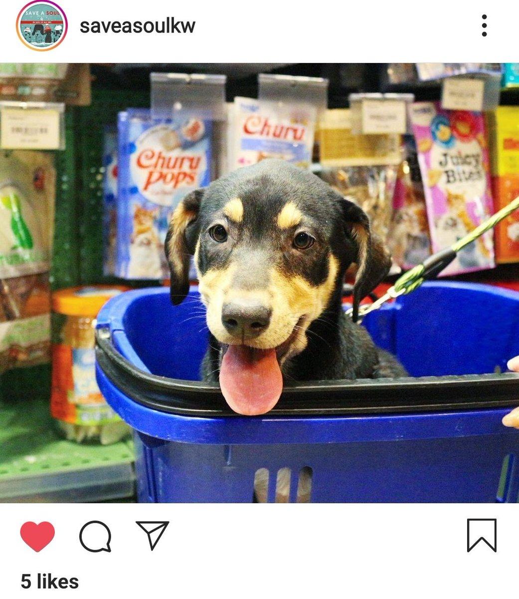 Only 30KD left! 👏👏👏  #canada #kuwait #animals #dosomethingwonderful #dogs #dogsoftwitter #nonprofit #help #2021goals