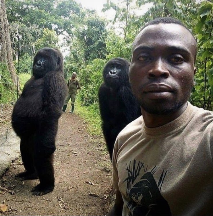 Yesterday six park rangers have been killed at the Virunga National Park in the Democratic Republic of Congo.  Killed while were on foot patrolling. This centre is specially made for orphan rare mountain gorillas. About 200+ rangers killed here in recent years. Green soldiers 🙏🏼