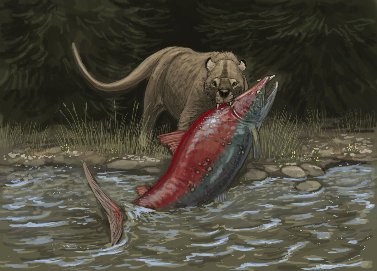 """Extinct Animals  on Twitter: """"Oncorhynchus rastrosus or the sabertooth  salmon was named after its two fangs which protrude from the snout. This  huge species of salmon could grow to 3 metres"""